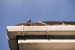 Does Homeowners Insurance Cover Squirrel Damage