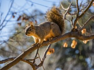 Will Trimming My Trees Keep Squirrels Out Of My House