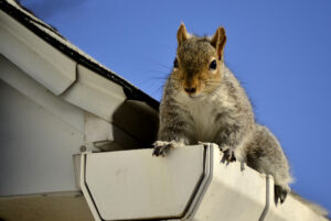 Will Adding Gutter Guards Keep Squirrels Out of My Home